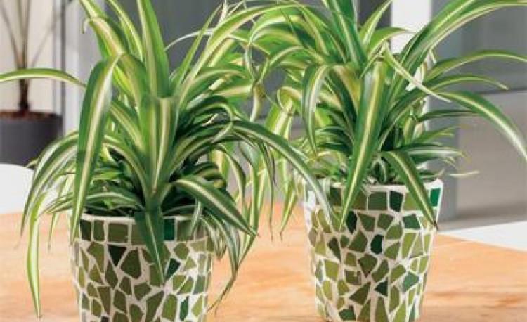 Комнатные растения, растущие в темноте. Топ 10 неприхотливых растений